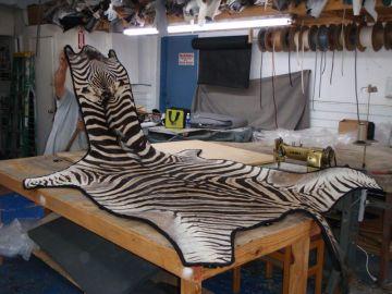 Zebra Wall Rug
